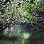 【台南】台江國家公園の四草生態緑色隧道は熱帯の自然を体感できる!